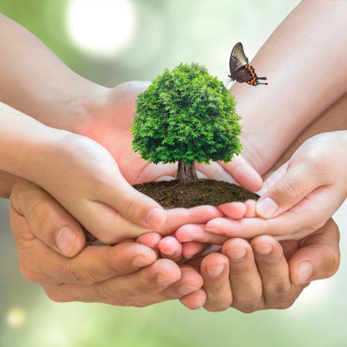 Educação Ambiental – Ecologia, Meio Ambiente e Sustentabilidade